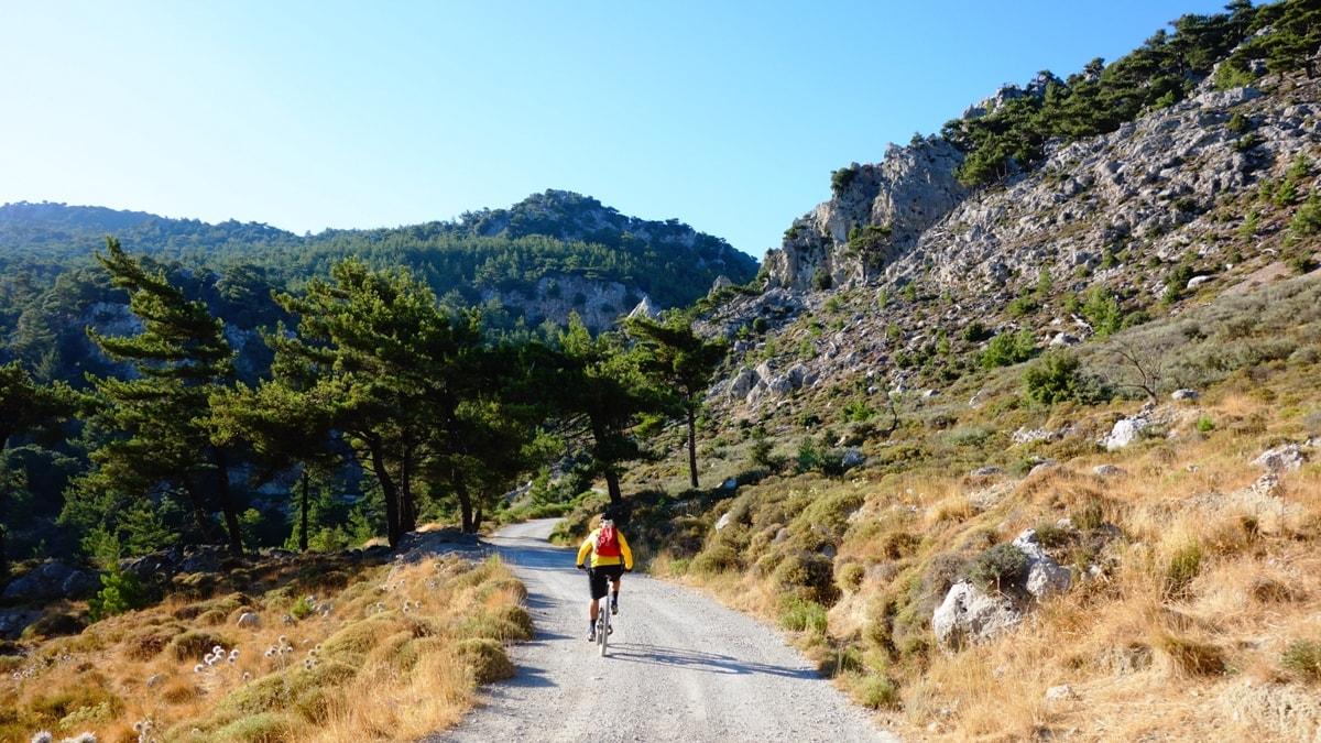 selakano-forest-dikti-mountains-crete