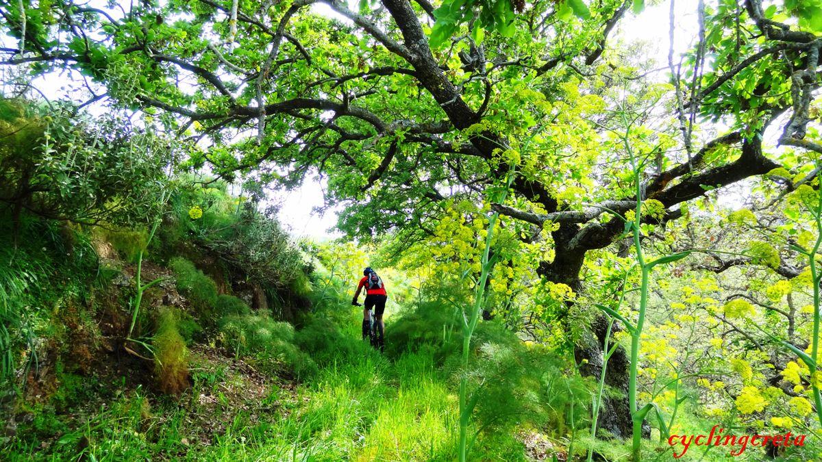 1 armenoi village Rethymno Crete oak forest