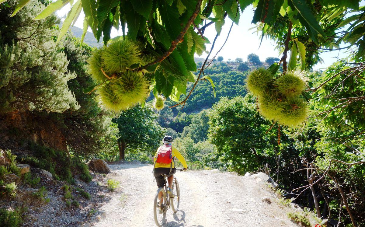chest nuts Chania Crete