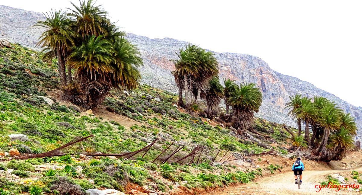 Palm forest agios nikitas Asterousia mountains Crete