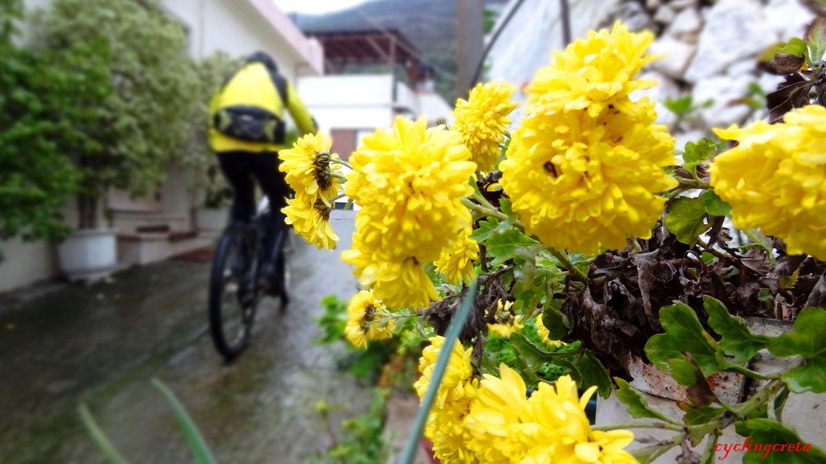 flowery crete header Neapoli