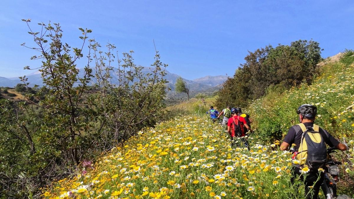 flowery crete header Psiloritis