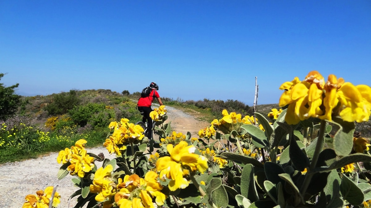 flowery crete header agarathia
