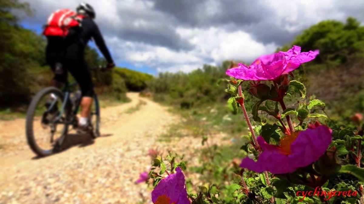 flowery crete header aladania