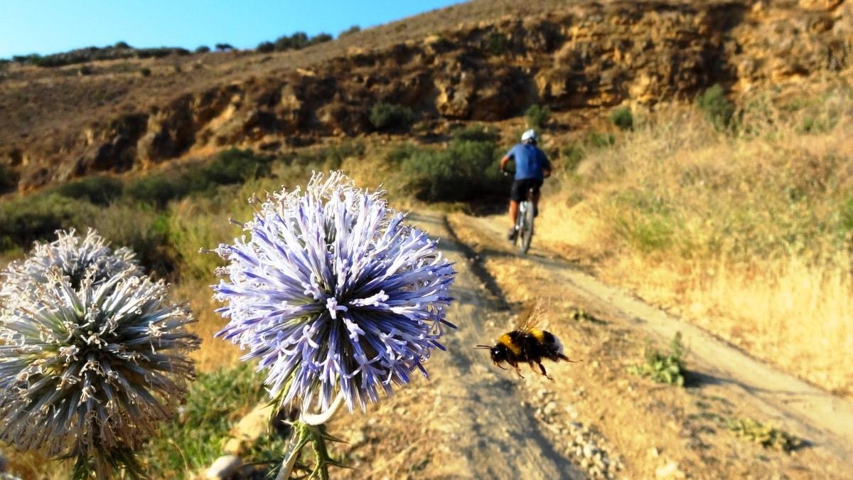 flowery crete header bublebee