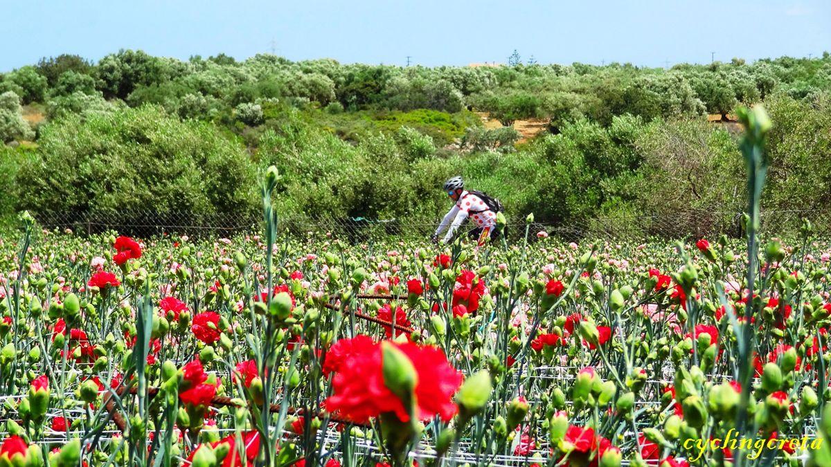 flowery crete header carnations