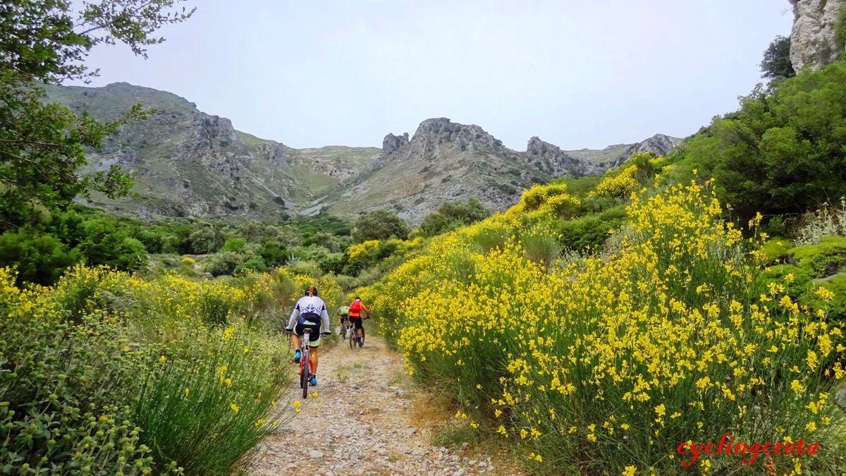 flowery crete header fourfouras