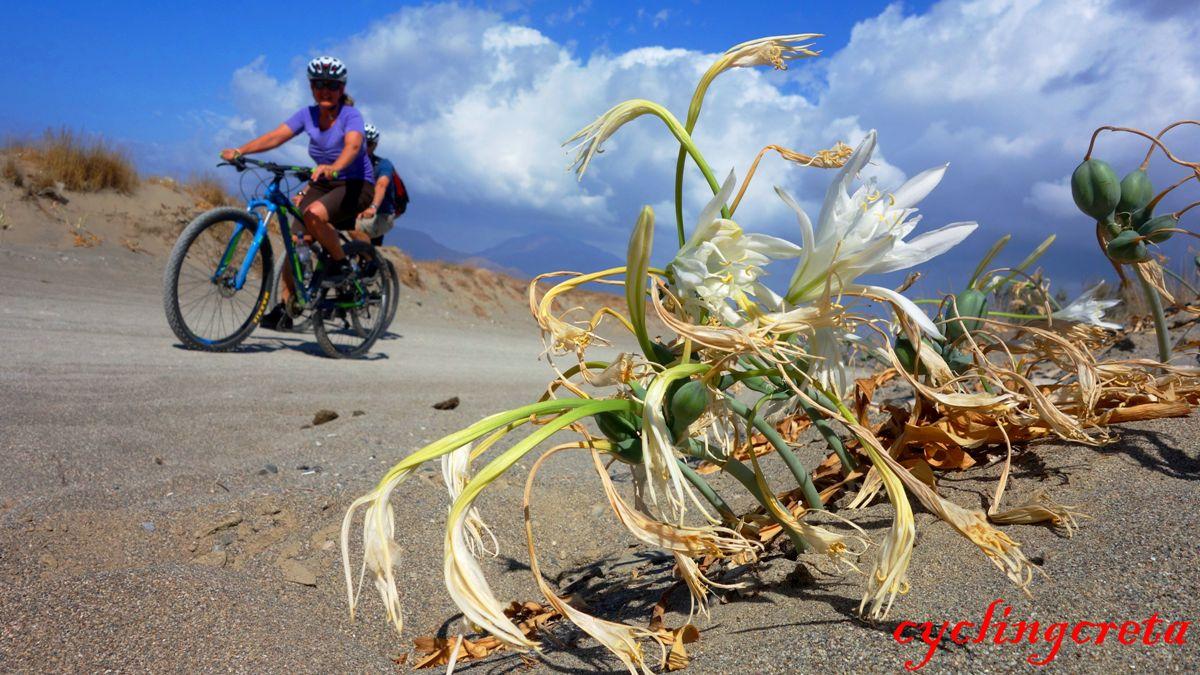 flowery crete header minoan prince lily-min