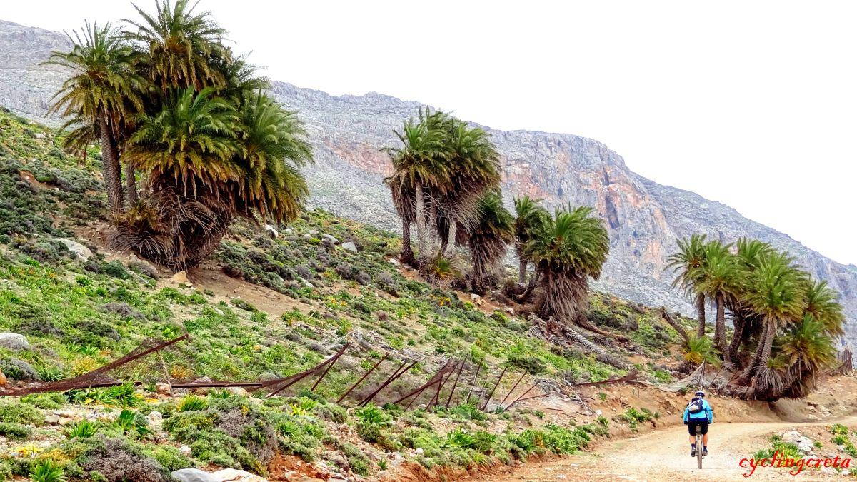 Agios Nikitas palm forest Achentrias-min