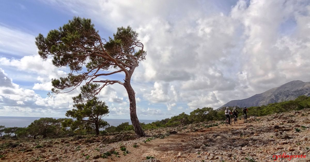pine tree on the way from Koudoumas Monastery to agios ioannis-min