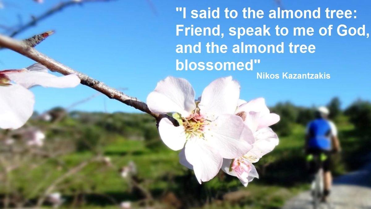 I said to the almond tree friend speak to me of God and the almond tree blossomed -Nikos Kazantzakis quotes for cyclists – CyclingCreta
