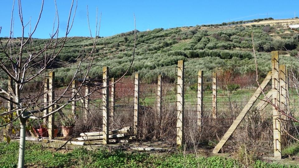 opsigias at agios myronas village Crete the ruins of the open air natural raisins sultanas driers