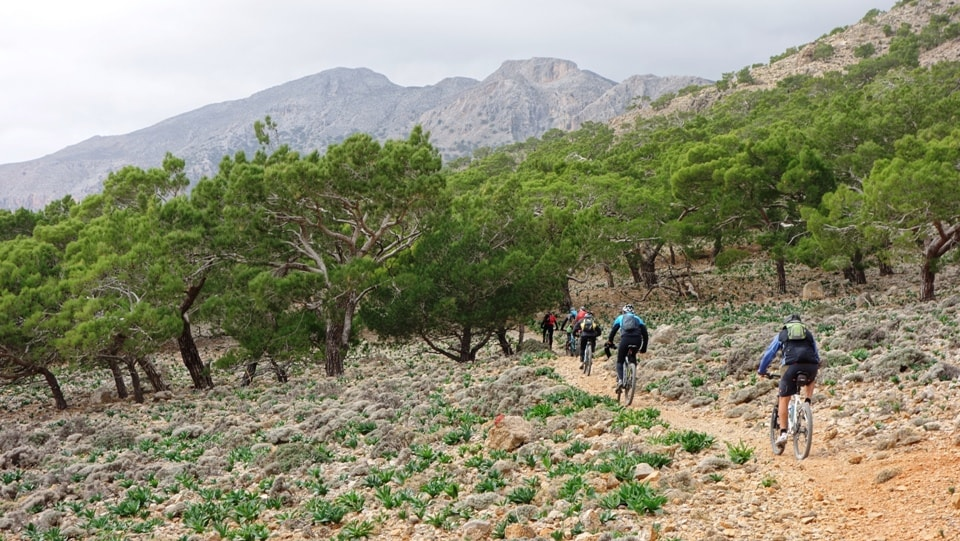 pine forest riders push the bikes kapetaniana kofinas koudoumas mountain bike tour Crete Kreta