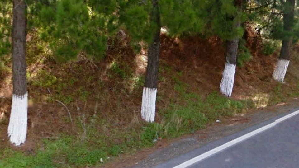 why do greeks paint trees white - feature img