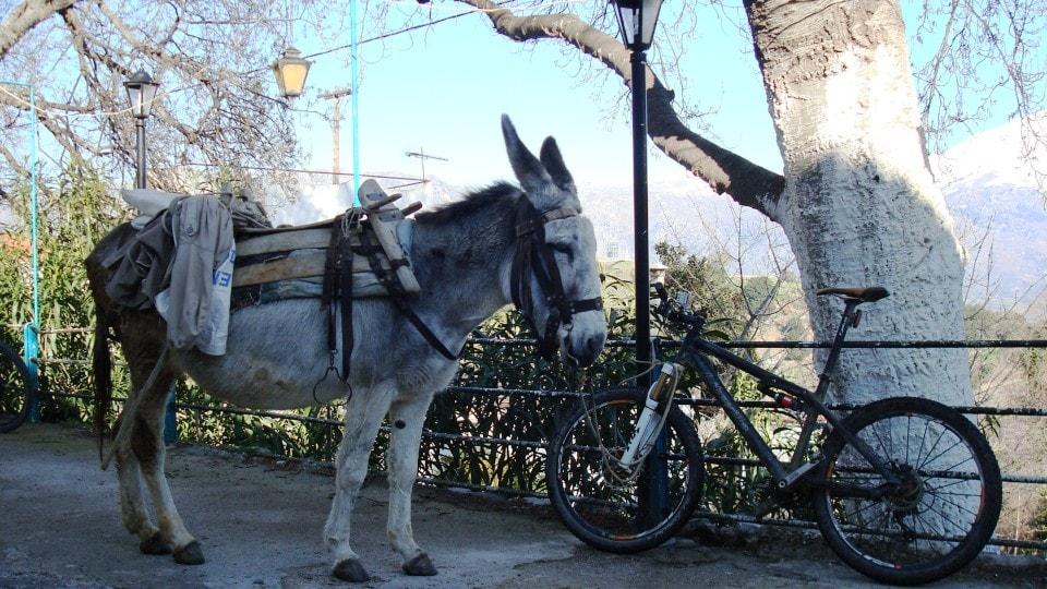 why do greeks paint trees white mountain bike and donkey