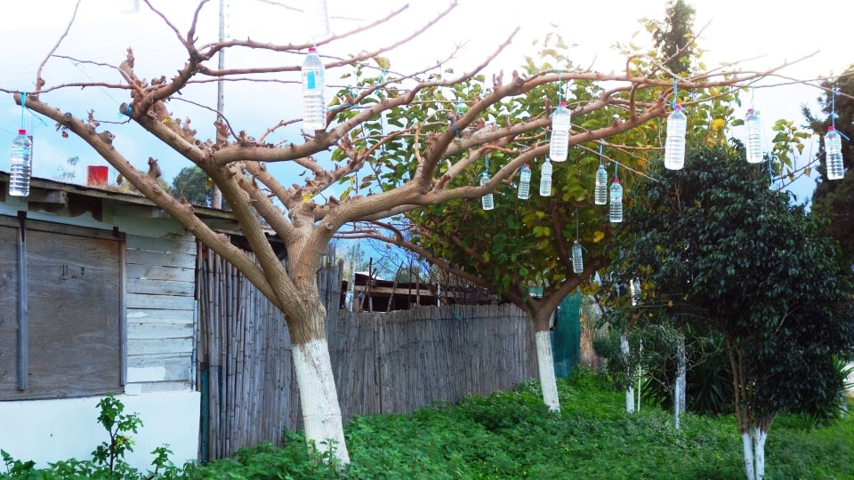 why they hang bottles on trees in Crete