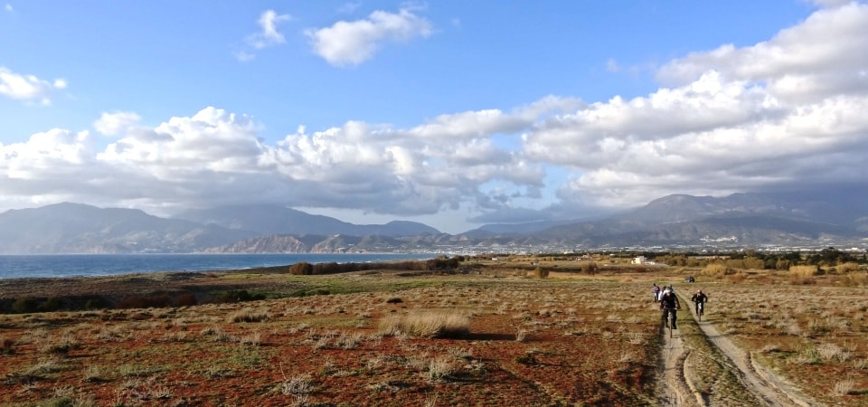 coastal sand vegetation