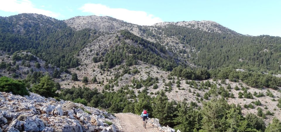 cypress forests in Crete. Cyclist and mountain white mountains