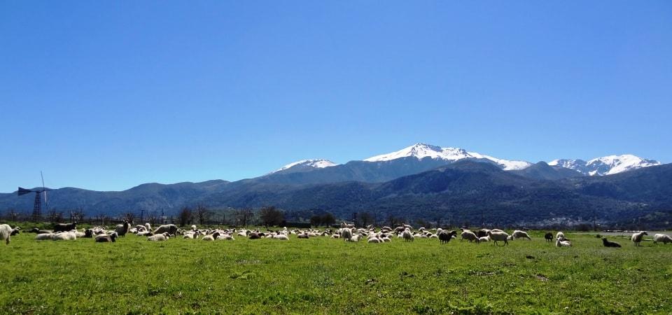 pastures lasithi plateau