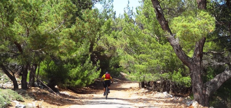 pine forests of Crete Amiras