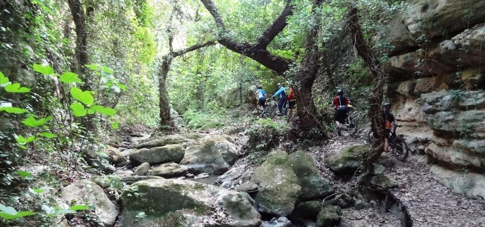 plane tree forests crete