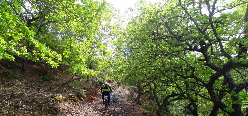 querqus forests Crete Oak trees armenoi of rethymno